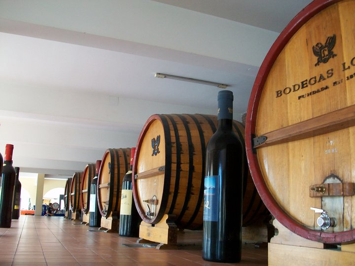Study Spanish and wine in Mendoza